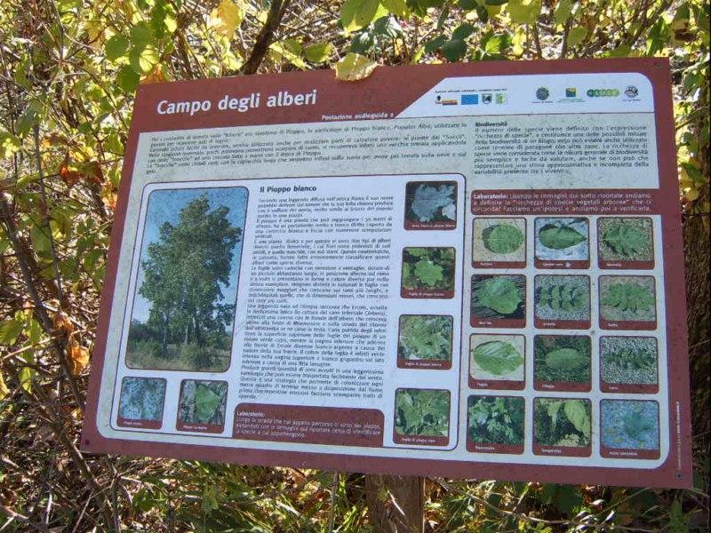 Il sentiero dei nomi bosco dei folletti urbania for Alberi alto fusto nomi