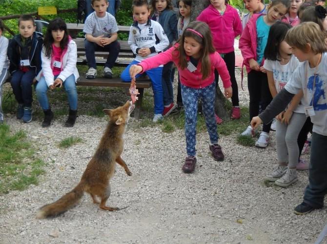 volpe-bosco-folletti-urbania-bambini