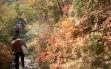 nel bf autunno
