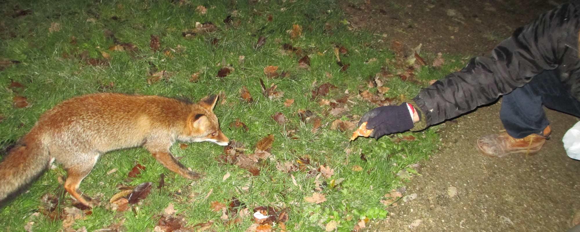 Incotra Roxy, la volpe!