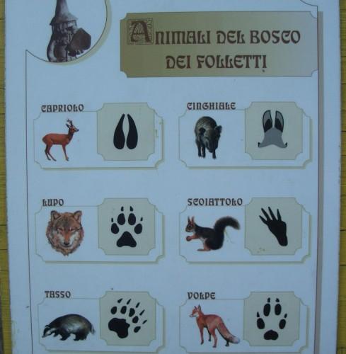 tracce animali bf